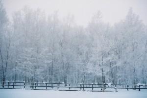 美瑛冬景色調整2
